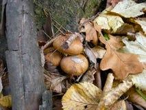 Mushroom family Stock Photo