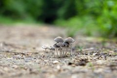 A mushroom family gathered in a group stock photos