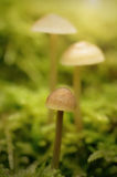Mushroom family on the mossy ground Stock Image