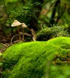 Beautiful closeup of forest mushrooms royalty free stock photos