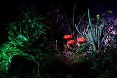 Mushroom. Fantasy Glowing Mushrooms in mystery dark forest close-up. Amanita muscaria, Fly Agaric in moss in forest. Magic mushroo Royalty Free Stock Photography