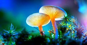 Mushroom. Fantasy glowing mushrooms in mystery dark forest royalty free stock photo