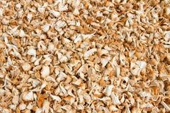 Mushroom farm Stock Images