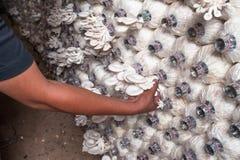 Mushroom in farm. A kind of thai mushroom called hed nang fa .Mushroom in farm Royalty Free Stock Images