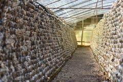 Mushroom Farm Royalty Free Stock Photography
