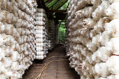 Mushroom Farm in phuket thailand Royalty Free Stock Photo