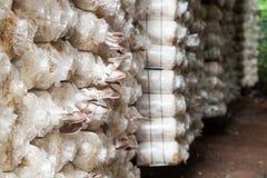 Mushroom Farm in phuket thailand Stock Photo
