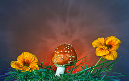 Mushroom and flower Stock Images