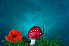 Mushroom and flower Royalty Free Stock Photography
