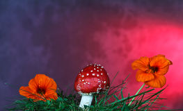 Mushroom and flower Stock Photography