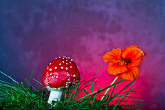 Mushroom and flower Royalty Free Stock Images