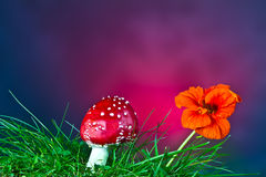 Mushroom and flower Royalty Free Stock Image
