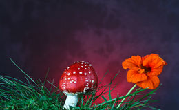 Mushroom and flower Stock Photos