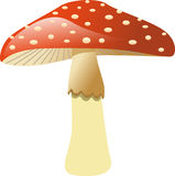 Mushroom - Fly agaric. Illustration of a poisonous Fly Agaric, mushroom Royalty Free Stock Photos
