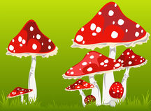 Mushroom a fly agaric Stock Image