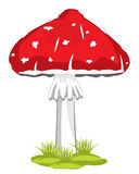 Mushroom fly agaric. Poisonous mushroom fly agaric on white background is insulated Royalty Free Stock Photos