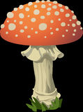 Mushroom, Fly Agaric, Red, Toxic Stock Photography