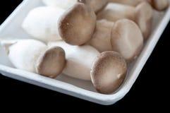 Mushroom in foam Stock Images