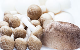 Mushroom in foam package close up Royalty Free Stock Photography