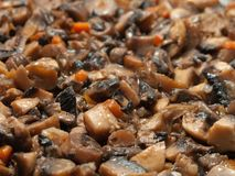 Mushroom food Stock Photography