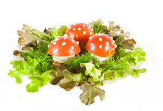 Mushroom food Stock Photo