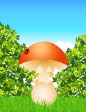 Mushroom in the forest Royalty Free Stock Photography