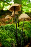 Mushroom in forest Stock Photos