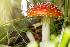Mushroom in the forest Stock Photos
