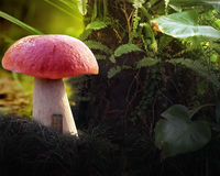 Mushroom. In forest Stock Photos