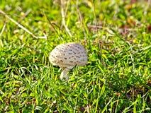 Mushroom on forest. On autumn Stock Photos