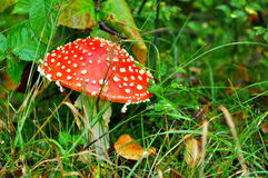 Mushroom in forest Stock Image