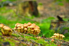 Mushroom in forest Royalty Free Stock Photo