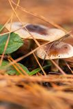 Mushroom on forest floor royalty free stock photos