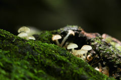 Mushroom in forest in forest Stock Photos