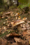 Mushroom on forest ground Stock Photo