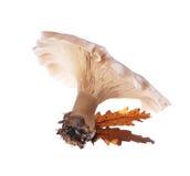Mushroom Royalty Free Stock Photo