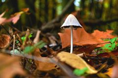 Mushroom forest leaf autumn Royalty Free Stock Photo