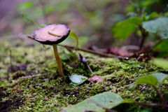 Mushroom in forest Stock Photos