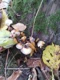 Mushroom. Forest leaves wood autumn Stock Image
