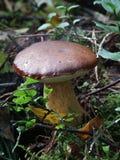 Mushroom Stock Images
