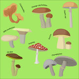 Mushroom forest set. Flat style vector illustration Stock Images