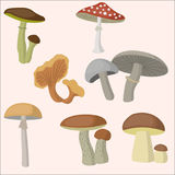 Mushroom forest set. Vector illustration Stock Image