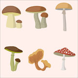 Mushroom forest set. White fungus, boletus, buttercup, chanterelles amanita pallid grebe stock illustration