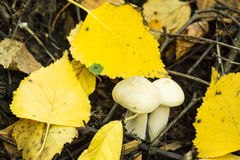 Mushroom in the forest. Shallow depth of field Stock Photo