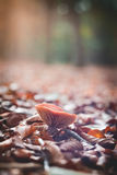Mushroom in forrest Selective Focus Stock Image