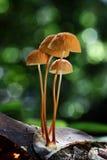 Mushroom Stock Image