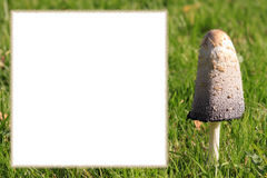Mushroom frame with copy space for own text Stock Photos