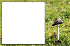Mushroom frame with copy space for own text Royalty Free Stock Image