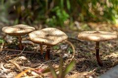 Mushroom, Fungus, Edible Mushroom, Medicinal Mushroom stock image