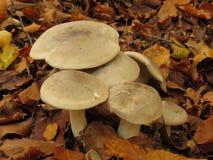 Mushroom, Fungus, Edible Mushroom, Medicinal Mushroom royalty free stock photography